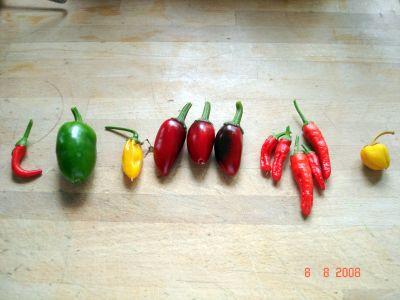 De første modne chilier